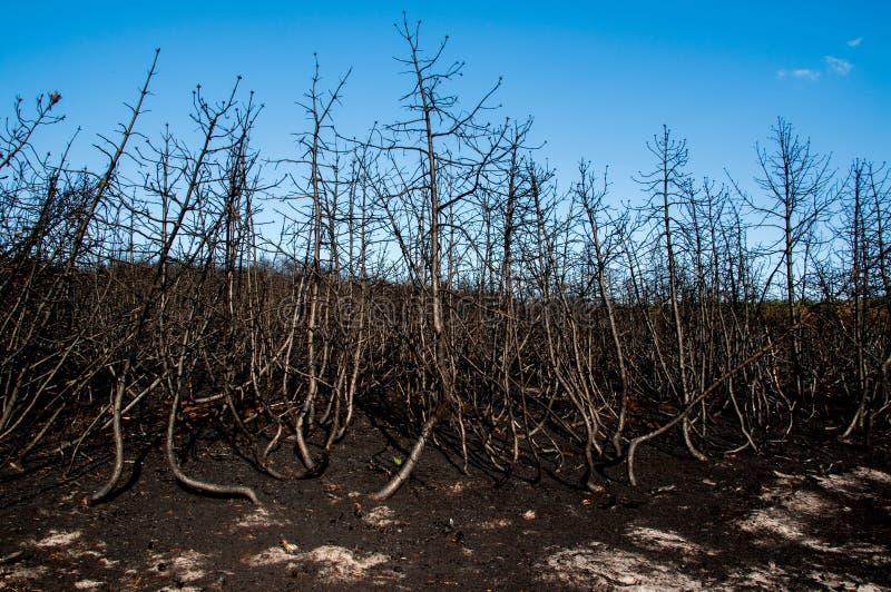 Download Forest Wild Después Del Fuego Foto de archivo - Imagen de salvaje, daños: 42444992