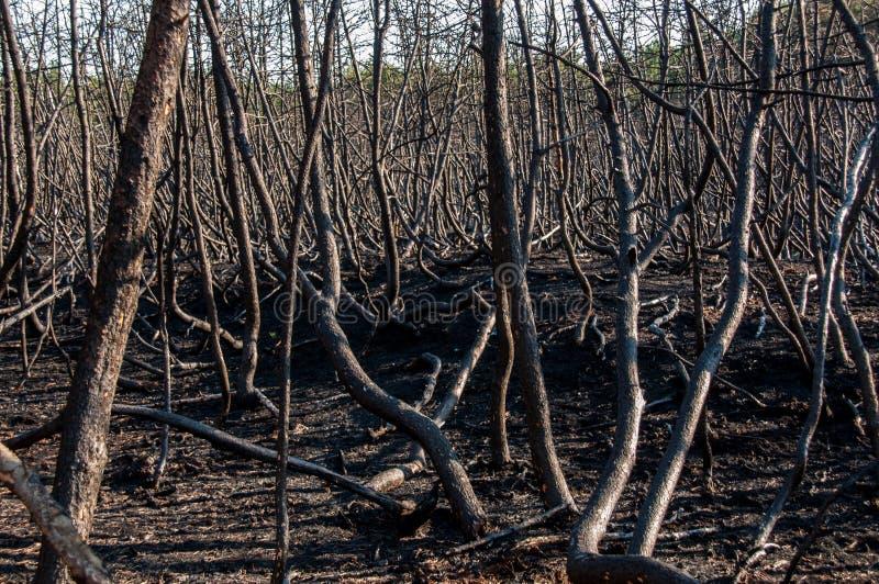 Download Forest Wild Después Del Fuego Imagen de archivo - Imagen de d0, deforestation: 42445031