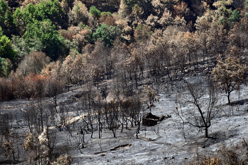 Forest Wild Fire. A burned area after Forest Wild Fire royalty free stock photo