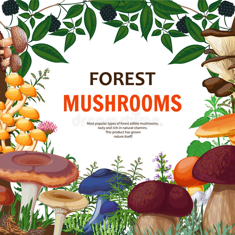 Forest Wild Mushroom Background vektor illustrationer