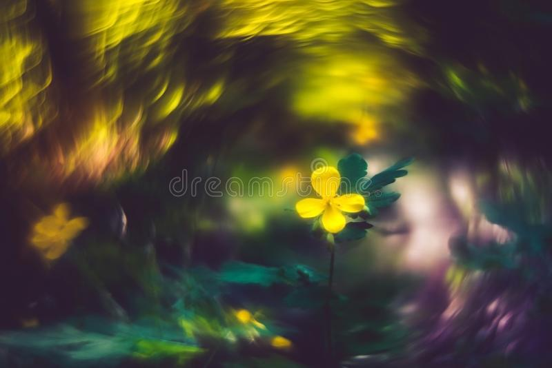 Wild forest flower and bokeh. Forest wild yellow flower celandine and swirly unique bokeh background