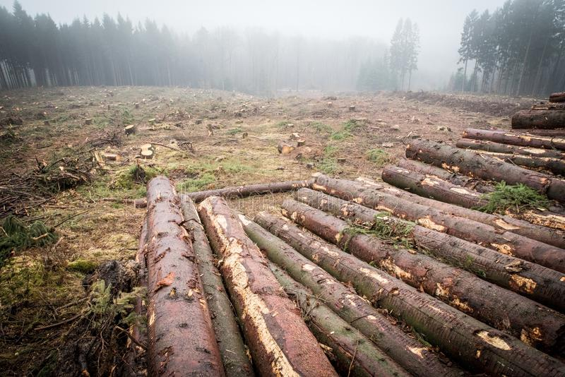 Forest, Wilderness, Logging, Path stock images