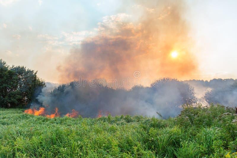 Forest Wildfire Brennendes Feld des trockenen Grases und der Bäume Schwerer Rauch gegen blauen Himmel Wildes Feuer wegen des heiß lizenzfreie stockbilder