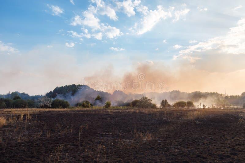Forest Wildfire Brinnande fält av torrt gräs och träd Tung rök mot blå himmel Lös varm blåsväder för brand tack vare royaltyfria foton