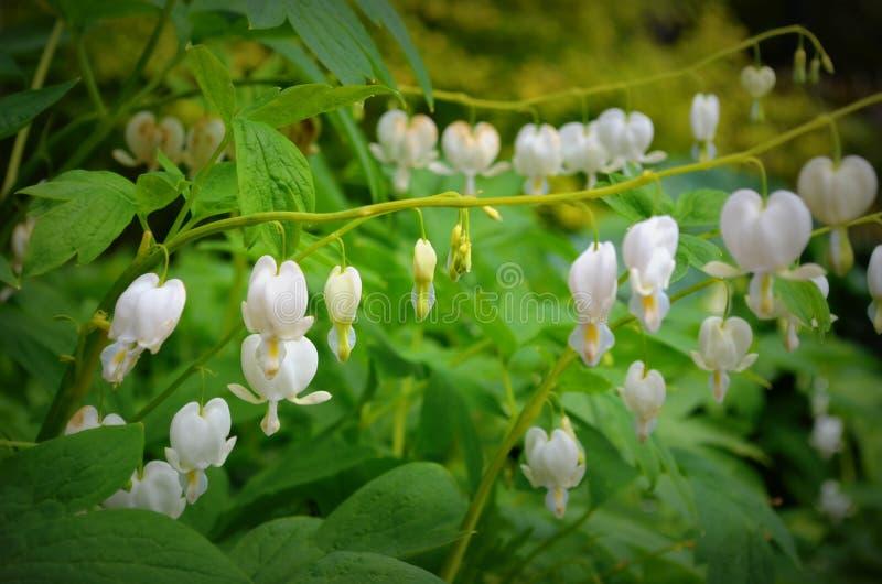 Forest Wildflowers fotografia stock libera da diritti