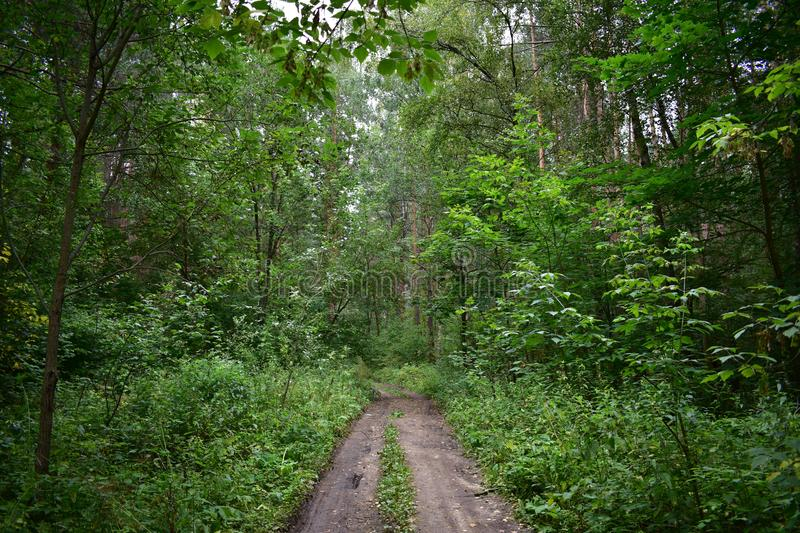 A forest winding road through thick deciduous lush trees and shrubs that create shade, bending the branches above stock photo