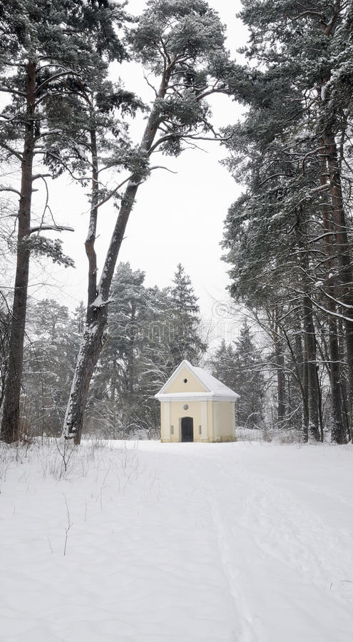 Download Forest In Winter Stock Photo - Image: 12429000