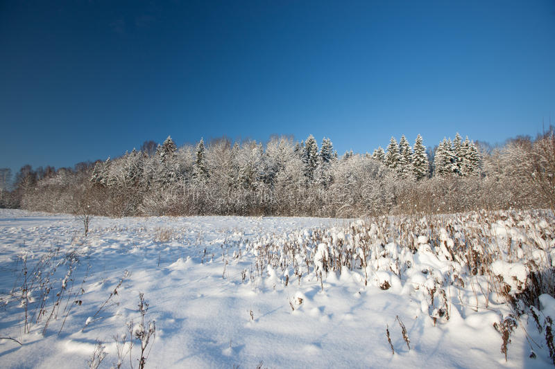 Download Forest In Winter Stock Photos - Image: 27866073