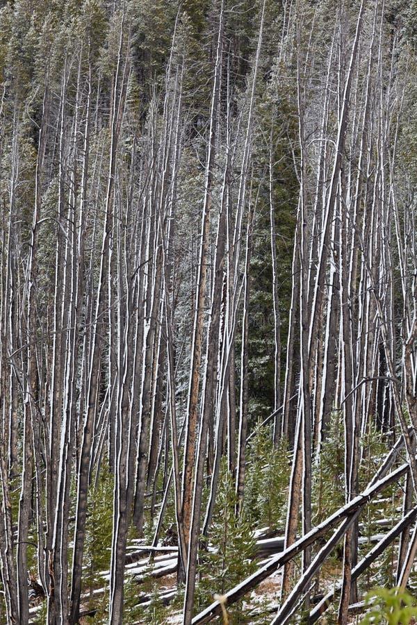 Forest Winter Abstract quemado fotos de archivo libres de regalías
