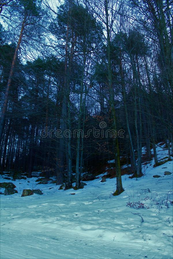 Forest in Winter royalty free stock photography