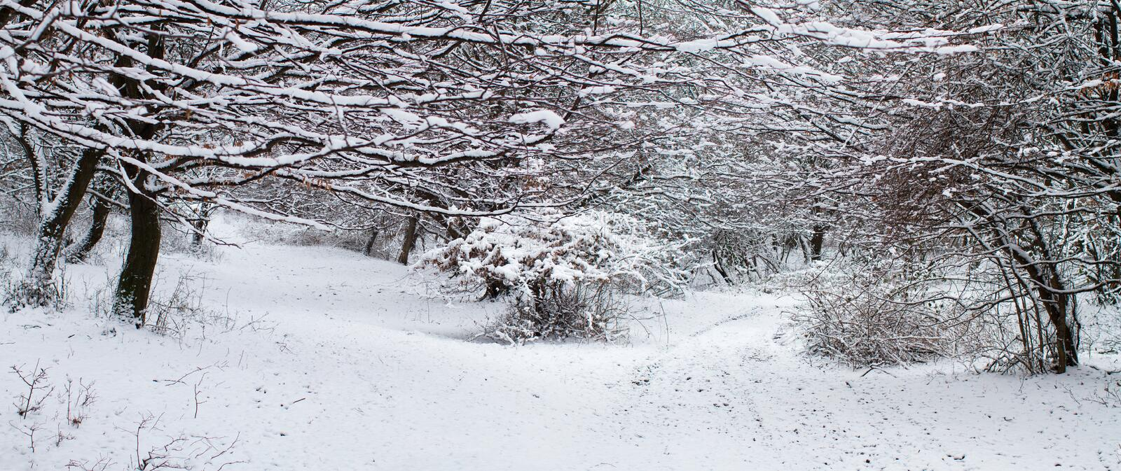 Forest in Winter - Panorama stock images