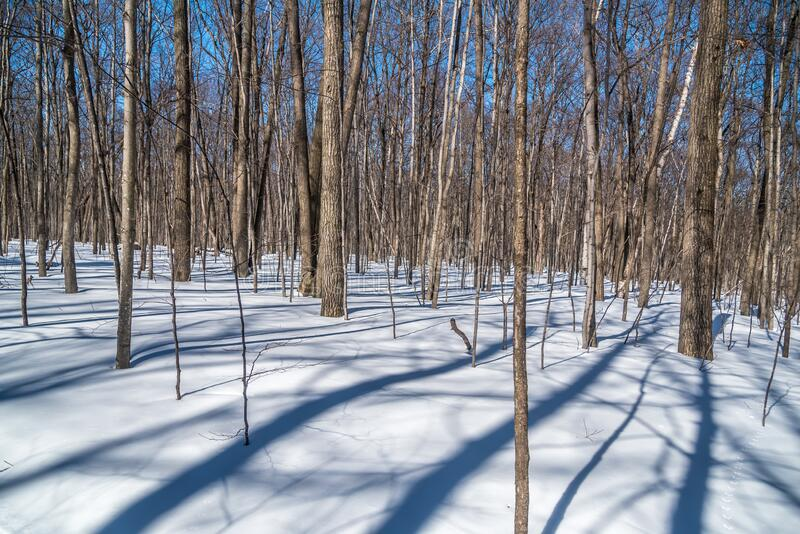 Forest in winter time royalty free stock photography