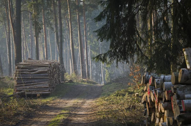 Forest with wood on the side of the road. stock photos