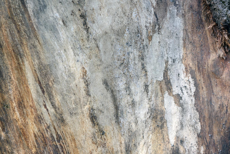 Forest wood texture stock image