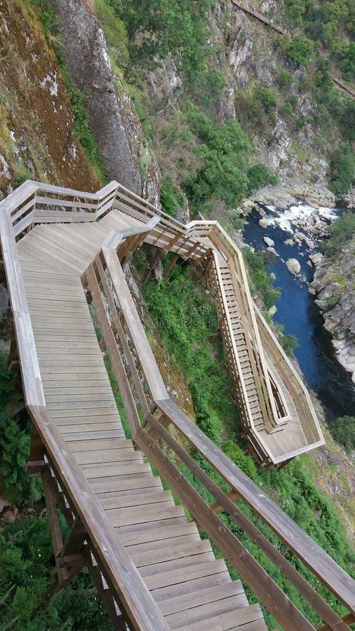 Forest Wooden Pathway royaltyfri fotografi