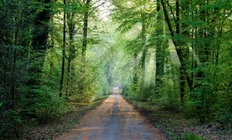 Forest, Woodland, Path, Nature stock images