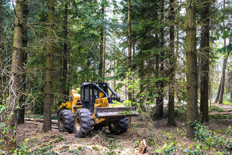 Forest work. Hauling wood in the forest by a grapple skidder royalty free stock photo