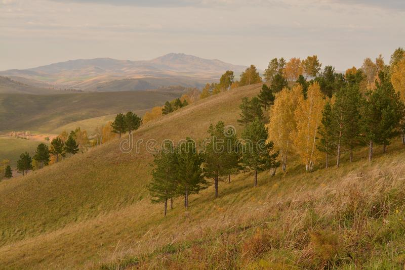 Green brown yellow valley hills autumn Russia. Forest yellow green valley bright autumn park Russia view of the valley hills horison stock image