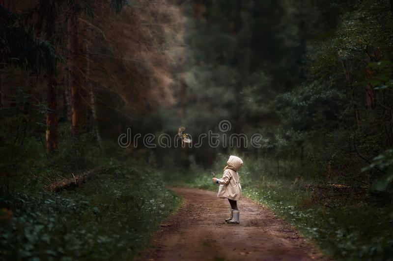 When forest is your home stock images