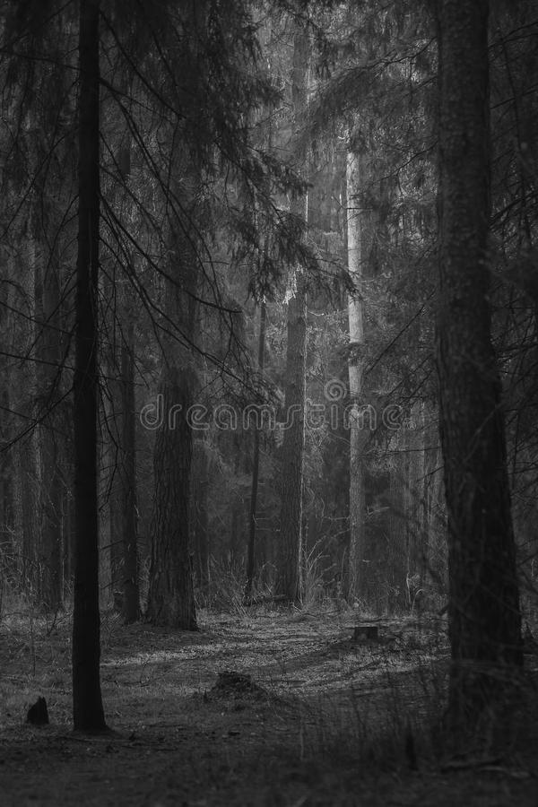 Forest in Zhukovsky, Russia. Dark forest in Zhukovsky, Russian Federation royalty free stock image