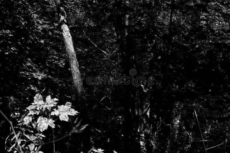 Forest1 Free Public Domain Cc0 Image