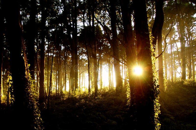 forest2 światło obraz royalty free