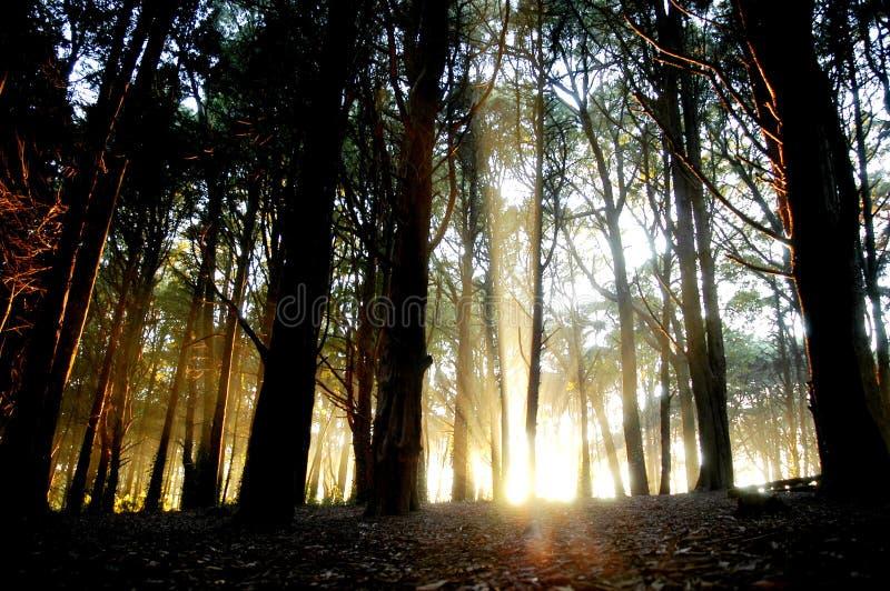 forest3 φως στοκ φωτογραφίες