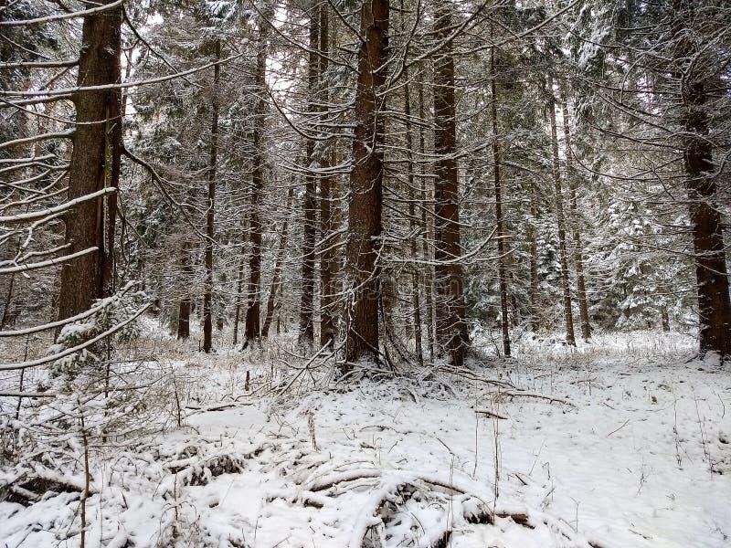 Foresta 2 immagine stock libera da diritti