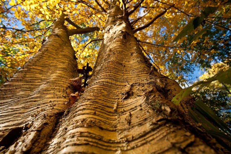 Download Foresta fotografia stock. Immagine di albero, denmark - 30830148