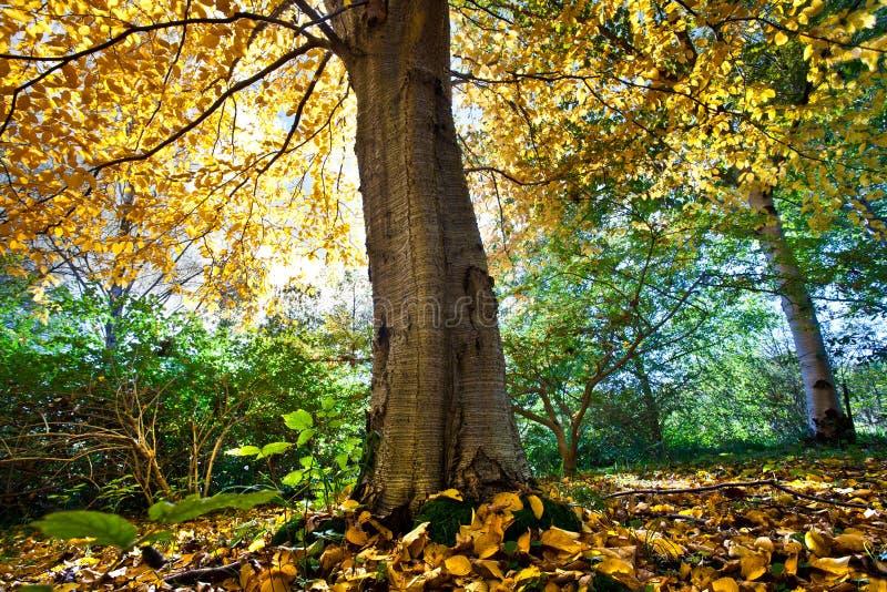 Download Foresta immagine stock. Immagine di rurale, foresta, yellow - 30830363