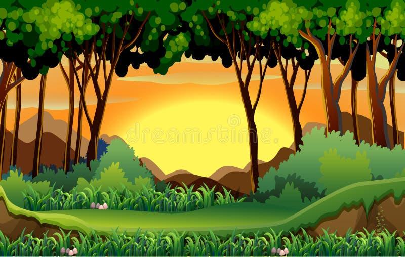 Foresta illustrazione vettoriale