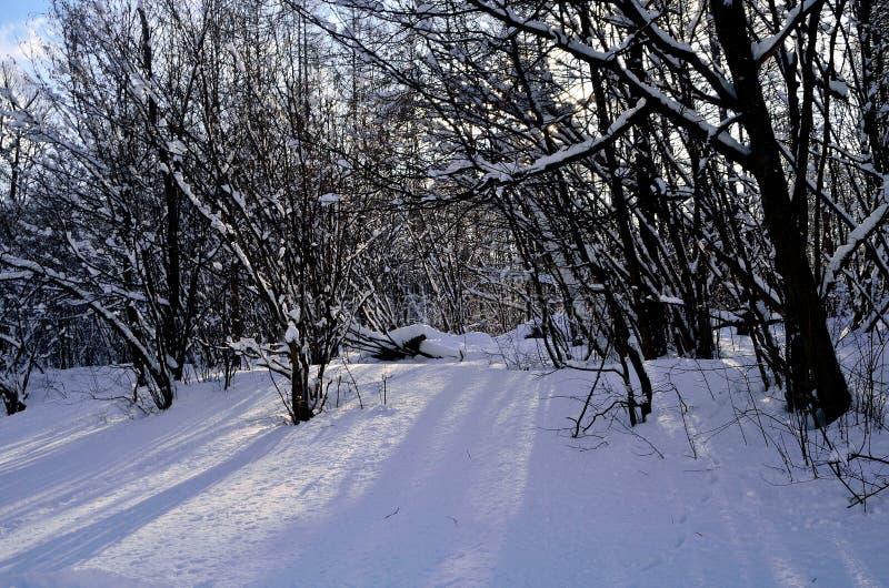 Foresta immagine stock