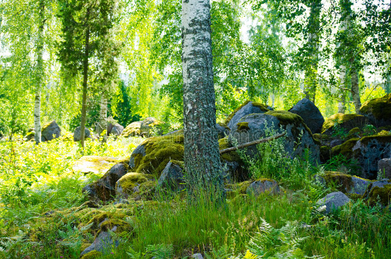 Foresta 18 immagine stock
