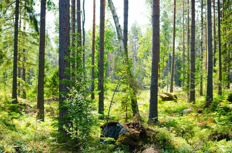 Foresta 19 immagine stock