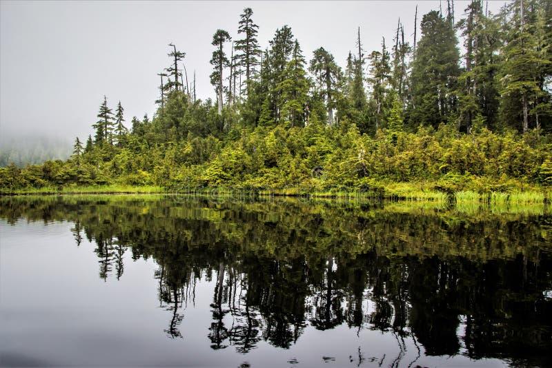 Foresta in acqua, Alaska immagini stock libere da diritti