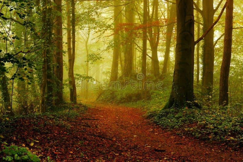 Foresta ad alba in autunno immagini stock