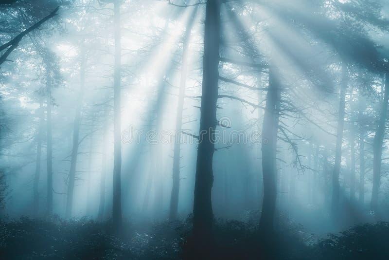 Foresta alla mattina con i raggi fotografie stock libere da diritti