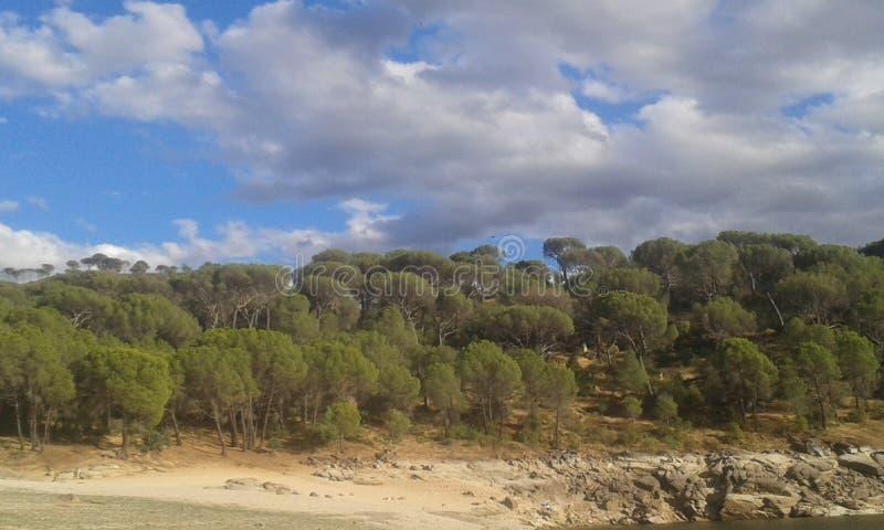 Foresta alla riva di un bacino idrico immagine stock libera da diritti