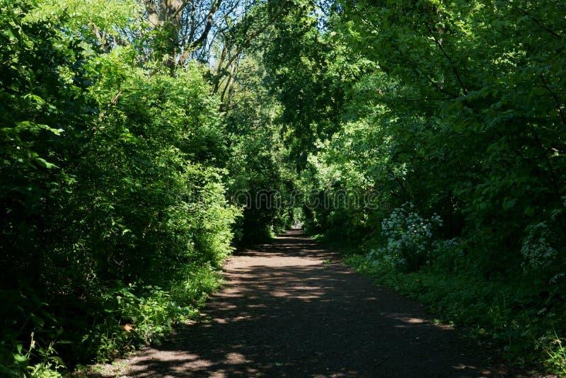 Foresta in Almere, Paesi Bassi fotografia stock
