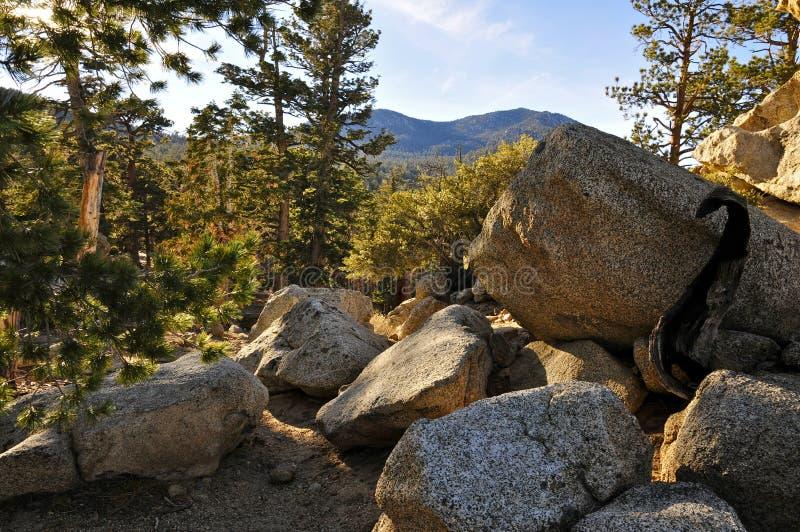 Foresta alpina vicino a San Jacinto Peak, Palm Springs fotografia stock