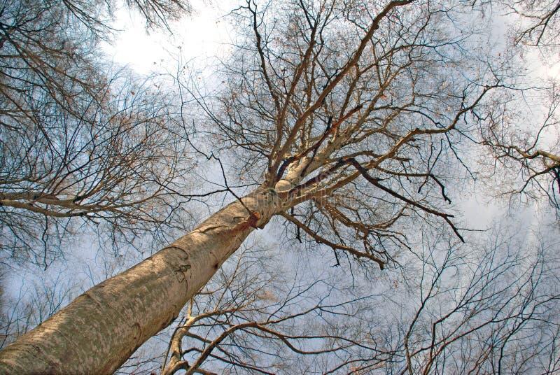 Foresta in anticipo della molla