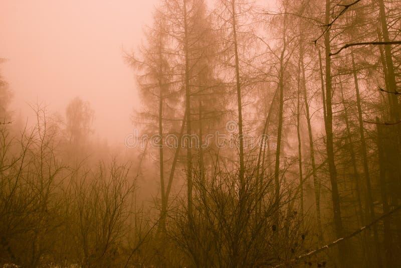 Foresta apocalittica della posta dopo una guerra nucleare fotografia stock