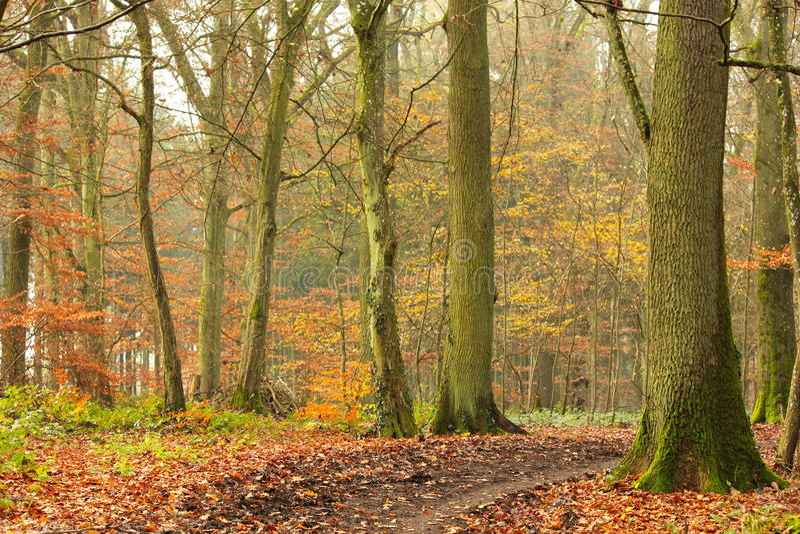 Foresta arrugginita verso la fine dell'autunno fotografie stock
