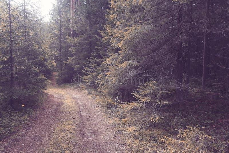 Download Foresta attillata densa immagine stock. Immagine di luce - 55359505