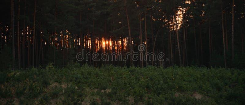 Foresta autunnale dopo il tramonto nella regione del kraj di Ceco Machuv il 13 ottobre 2018 fotografia stock