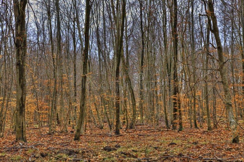 Foresta in autunno