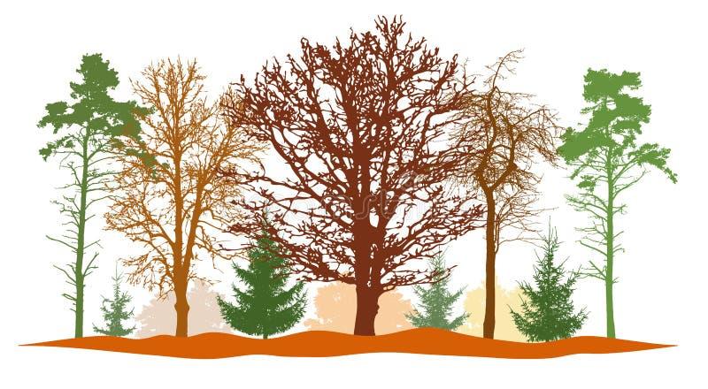 Foresta in autunno, siluette dell'albero nudo, abeti, pino ed ecc Illustrazione di vettore illustrazione di stock