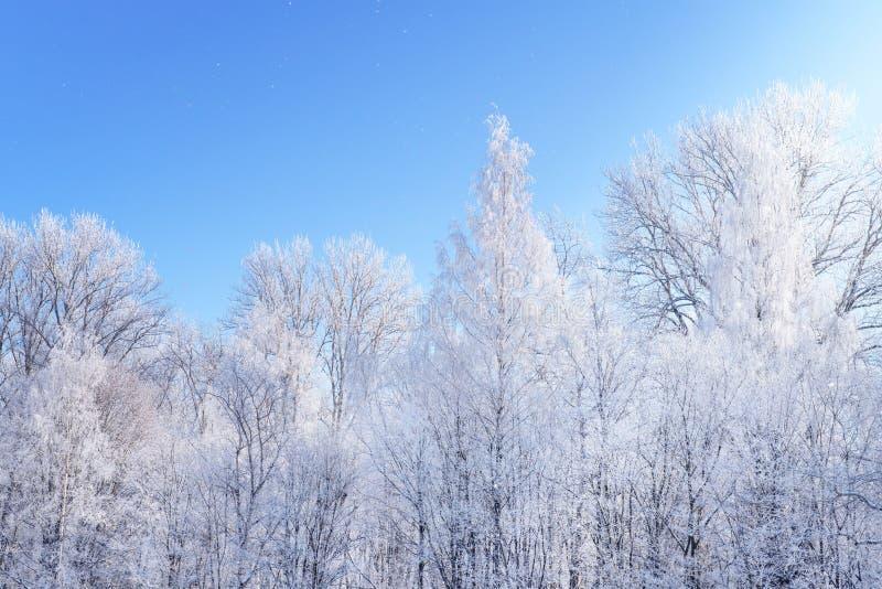 Foresta bianca di inverno contro cielo blu immagini stock libere da diritti