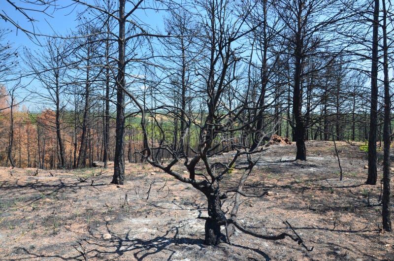 Foresta bruciata immagini stock