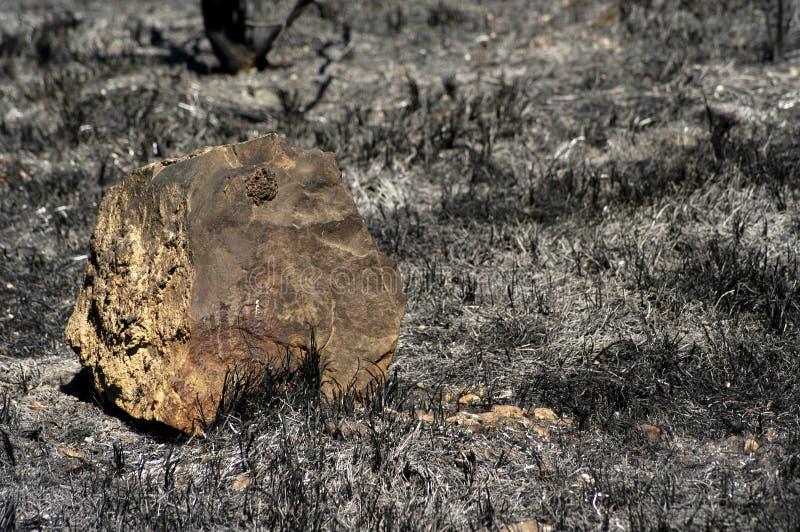 Foresta bruciata immagine stock